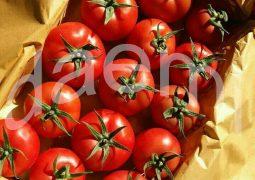 بسته بندی گوجه فرنگی گلخانه ای 2 255x180 -