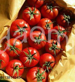 بسته بندی گوجه فرنگی گلخانه ای 2 255x280 -