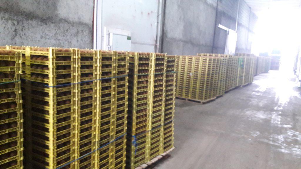 ۲۰۱۹۰۲۰۸ ۱۱۱۷۵۰ 1024x576 - صادرات کیوی