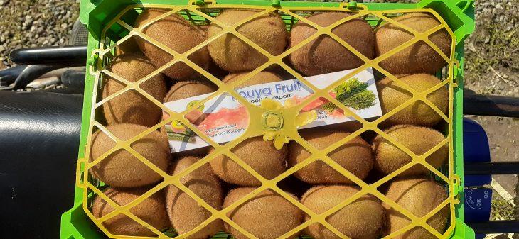 صادرات کیوی روسیه