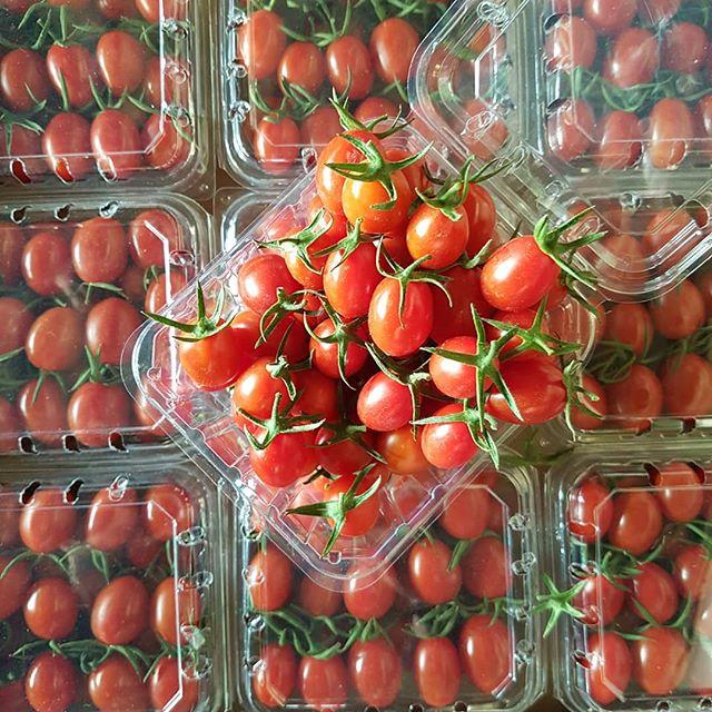 صادرات گوجه درجه ۱