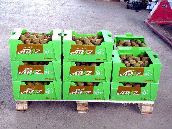 IMG 20190924 WA0008 - صادرات کیوی دائمی