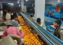 IMG 20191201 WA0005 255x180 - صادرات پرتقال