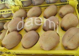 IMG 20190124 224022 185 1 255x180 - صادرات کیوی به ازبکستان
