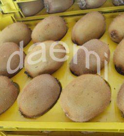 IMG 20190124 224022 185 1 255x280 - صادرات کیوی به ازبکستان