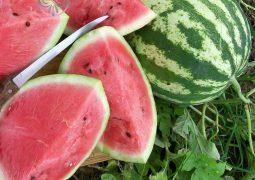Watermelon Crimson Sweet 01 768x768 255x180 - هندوانه صادراتی